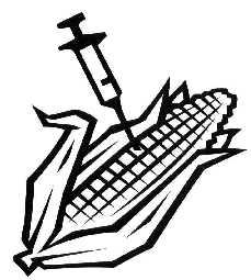 GMO_jagung